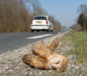 Nieuwsbericht_dieren_onder_de_wielen_foto