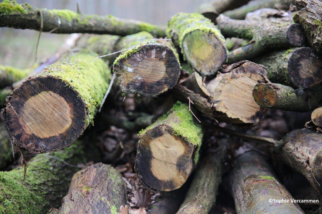Waarom kappen we bomen?